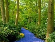 Jardines y plantas / Tendencias de jardines