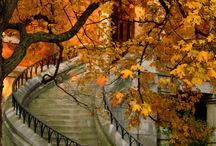 Falling for Autumn / by Kimberly Hamner