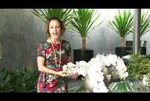 como fazer um terrario  com flores naturais  Katherine  Ribeiro