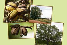 Farming Nuts