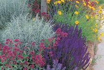 Drought Resistant Gardening / Inspirational photos of drought resistant gardens