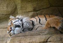 London Zoo / Animals at London Zoo