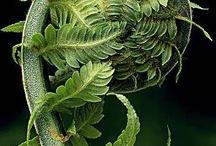 Macro plantas