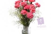 Loving Carnations