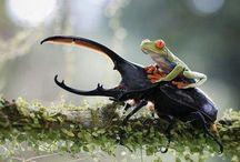 Cool wild photos