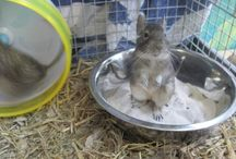 Our Nursery Animals