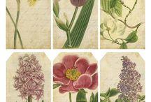 Vintage prints and Botanical illustrations