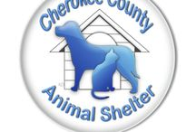 Shelter Information / Here you will find a link to our webpage and lots of handy information about Cherokee County Animal Shelter.