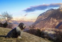 Switzerland, Canton of Valais 2012 / My dogs rans over the hills to complete exhaustion. Never beens as tired in these beautiful mountains.