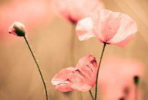 Flower / by Pandora Hsieh