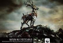 WWF / by Yoshihiro Murakami