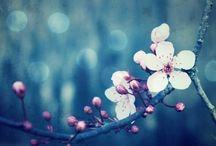 Bloom/桜梅桃李