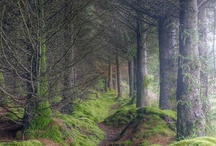Natures Paths / Pathways and Trails