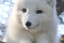 whites,silver