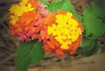 Butterflies and Hummingbird gardens