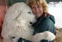 Great White Pyrenees/ Mareema