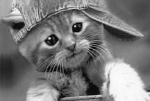 swagg kittz / #Swaggness