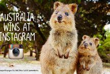 Australien tierwelt