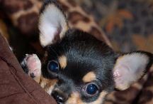schattige hondjes