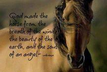 horses&pasion