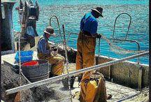 La pesca/ fishing  / #ametllademar #ametllamar #terresdelebre #tarragona #catalunya #catalogne #cataluña #catalonia #pesca #fishing #pêche #platja #playa #plage #beach #estiu #verano #été #summer #sun #vacances #vacaciones #holiday #traveling #viajes #travel #visit #eatheword #vamosdeviaje #voyage #escapadas #experiences #traveller #food #gastronomia #gastronomy # happyholidays #mediterrani #mediterraneo #mediterranean #visiting #vacation #trip #tourism #tourist