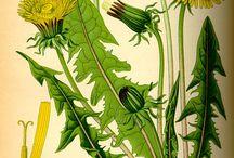 Dibujar plantas y flores