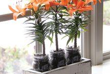 Plantas y flores / by Edith Carbajal