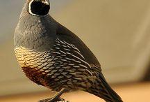 Cute Bird Pictures