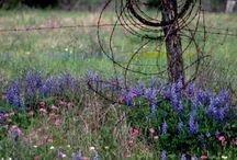 WIld Flowers Photographs / Flowers