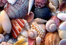 Deniz kabuklar