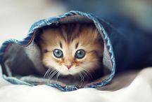 Cutest Cats / A collection of pictures of the cutest cats.