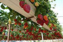 owoce & warzywa