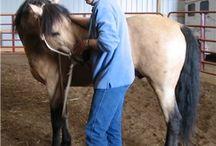 Horses : Training
