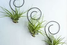 Air Plant Ideas