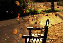 photo d'automne