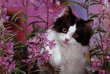 Les CAT'S  SAISONS !!!! / Les chats en toutes saison