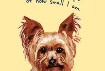 Doggie Style / by Michelle Estevez