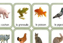 ief - Maternelle