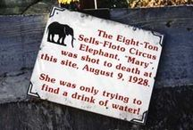 """Elephant Research / Links, photos and info discovered during research for a picture book I'm writing about a family and a """"little"""" elephant problem."""