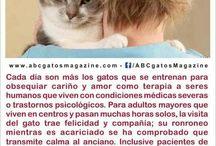 Gatos terapeutas