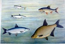Kaloja opetustaulu