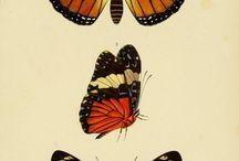 Эскизы бабочки