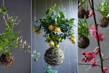 Kusamono & Bonsai side plants