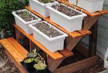 Petite Garden  / Small garden ideas