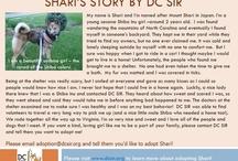 Shari - Adopted! / Adopted June 2013