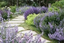 Purple and Picturesque / A collection of plants and gardens in plum-colored shades