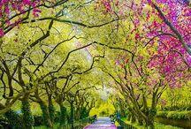 Rue d'un park japonais