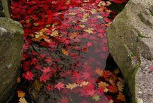 autumnal / by elizabeth chenoweth