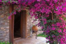 il giardino delle meraviglie °•° pergole e tralicci