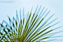 Photography Tutorials/Articles by Sherri Meyer Photography / by Sherri Meyer Photography